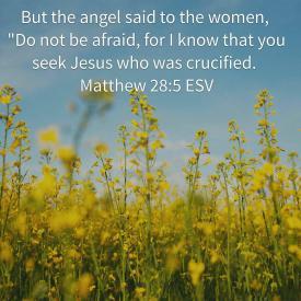 Matthew 28-5